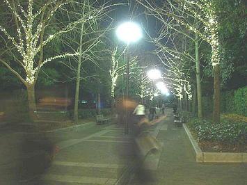 公園側に向けて伸びるプロムナードの夜景。両端に目映く樹木イルミネーションが何とも目に染みる《091220撮影》