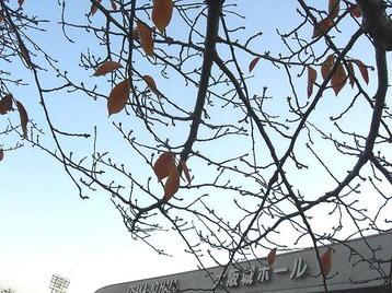 本番を前に、外気に触れるべく、部分開放された大阪城ホール・北玄関前広場へと出た私。ふと見上げると、そこには僅かに残る赤く色づいた葉っぱを伴った木の枝が見えた《101205休憩中に撮影》